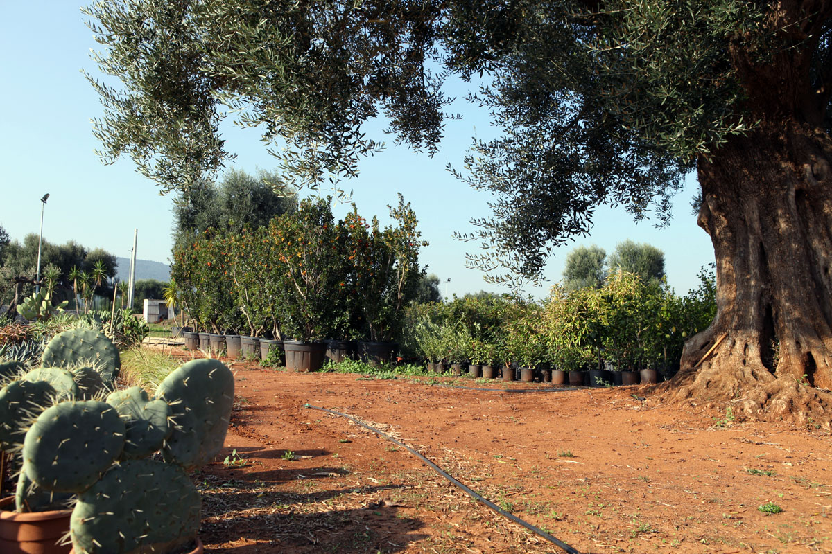 Azienda Agricola Zizzi